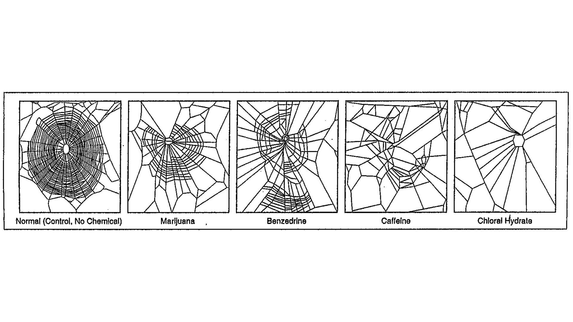 En 1995, des scientifiques ont évalué la toxicité de différents produits chimiques en analysant leur impact sur la construction de la toile.