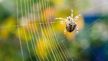 Chaque Toile D'araignée Est Elle Unique ?