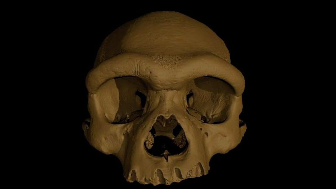 Dans une image non datée de Xijun Ni, une reconstruction numérique du crâne surnommé