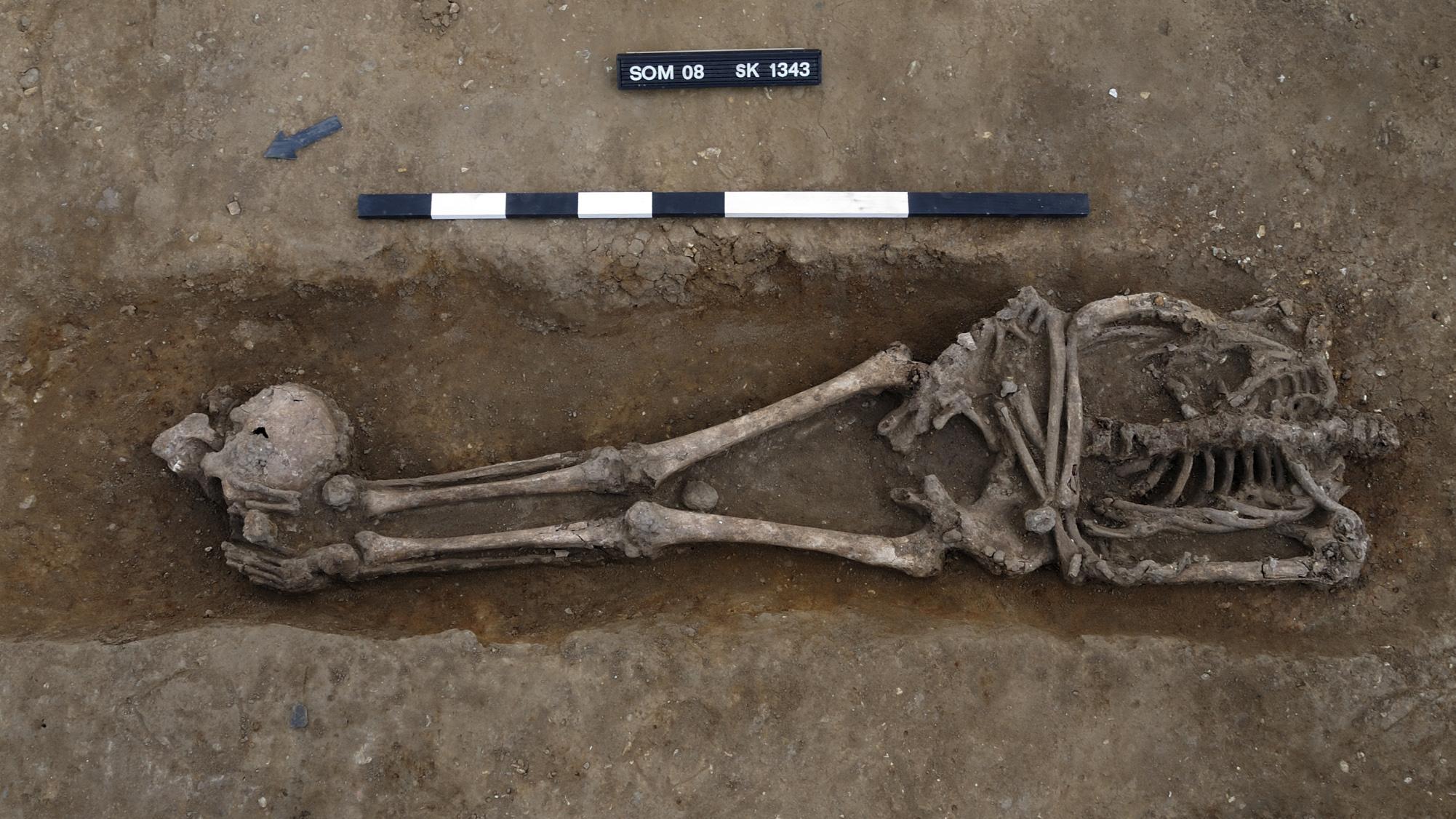 Ici, un autre squelette décapité trouvé sur le site de la ferme Knobb.