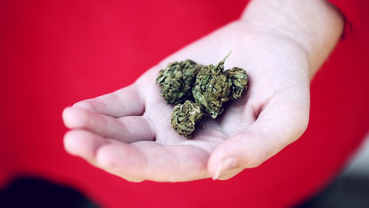 275 Millions De Personnes Ont Consommé Des Drogues, 36 Millions