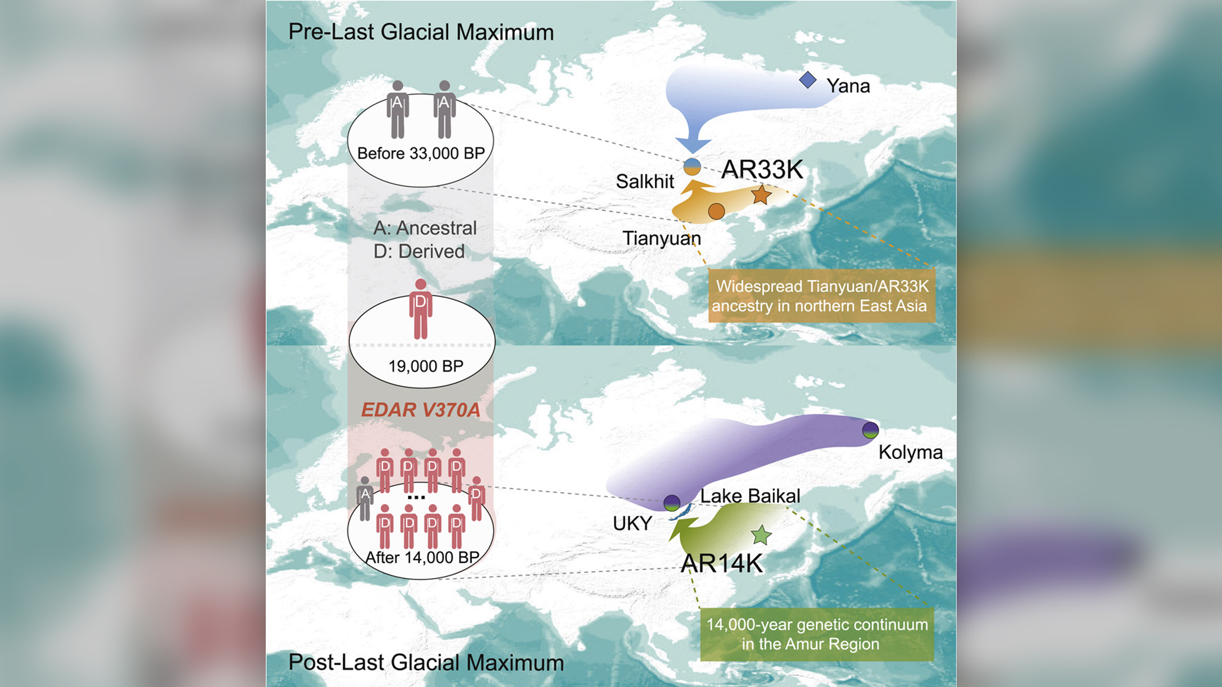 Carte montrant la population ancienne d'Asie de l'Est au fil du temps