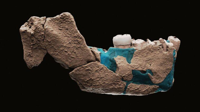 """Des Archéologues Israéliens Découvrent Des Restes D'un Nouveau Type D'""""humain"""