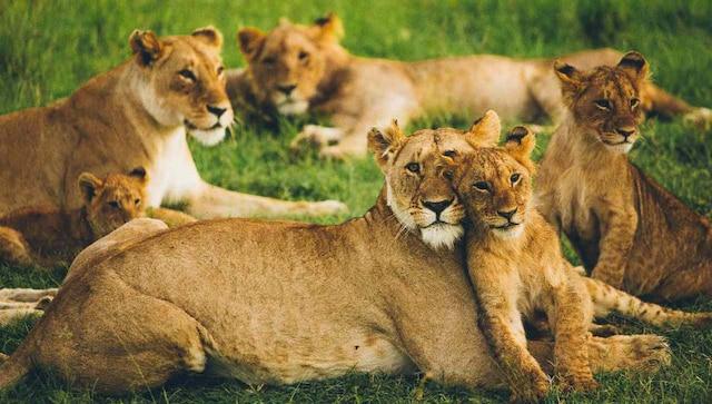 Explication: Comment le COVID-19 affecte-t-il les animaux sauvages et les animaux de compagnie?