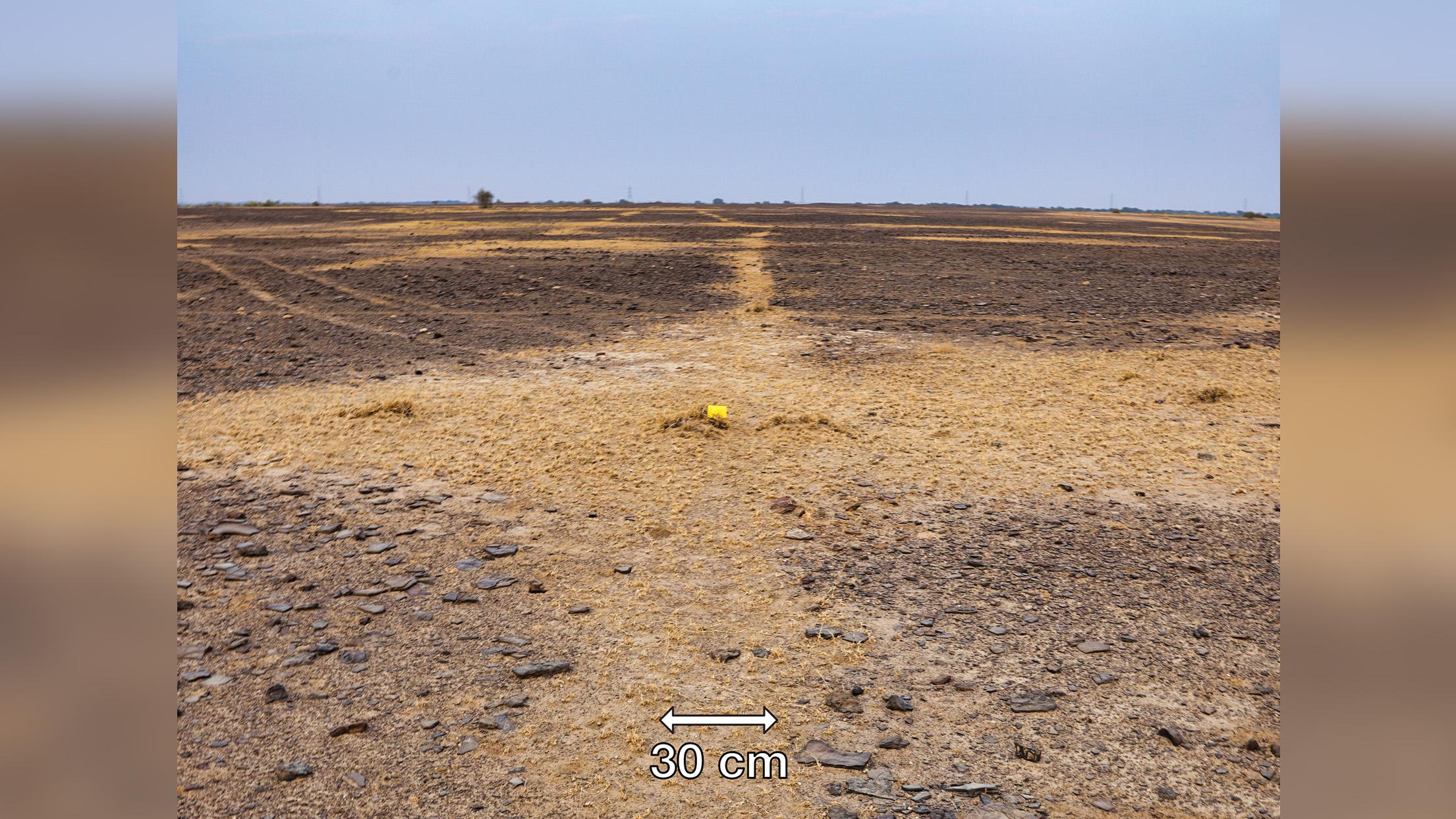 Dans cette image d'un géoglyphe en Inde, vous pouvez voir une ligne de végétation avec du sable et des limons, qui se produit pendant la saison sèche.