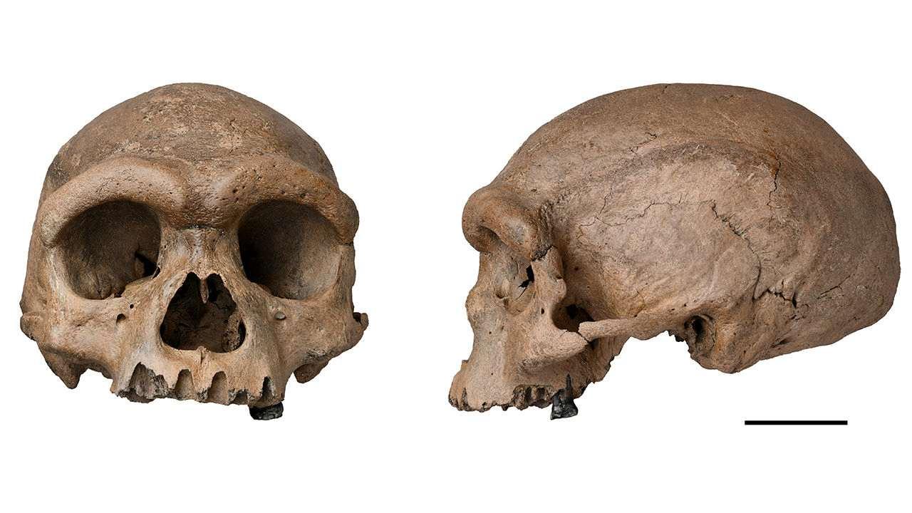 Dans une image non datée de Xijun Ni, le crâne surnommé