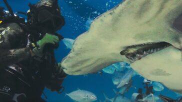 La Remorque De Shark Beach Laisse Tomber Chris Hemsworth Profondément