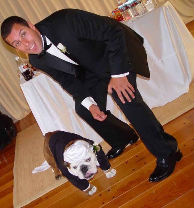 Meatball était le meilleur homme d'Adam Sandler lors de son mariage en 2003. Crédit: Getty Images