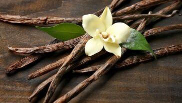 L'huile De Vanille Aide à Contrôler Les émotions