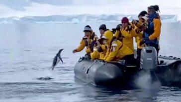 """""""Oh mon Dieu, je suis dans la gueule d'une baleine"""": écoutez comment ce plongeur a survécu à une épreuve effrayante"""