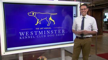 Premier Pékin !  Wasabi le Pékinois remporte l'exposition canine de Westminster