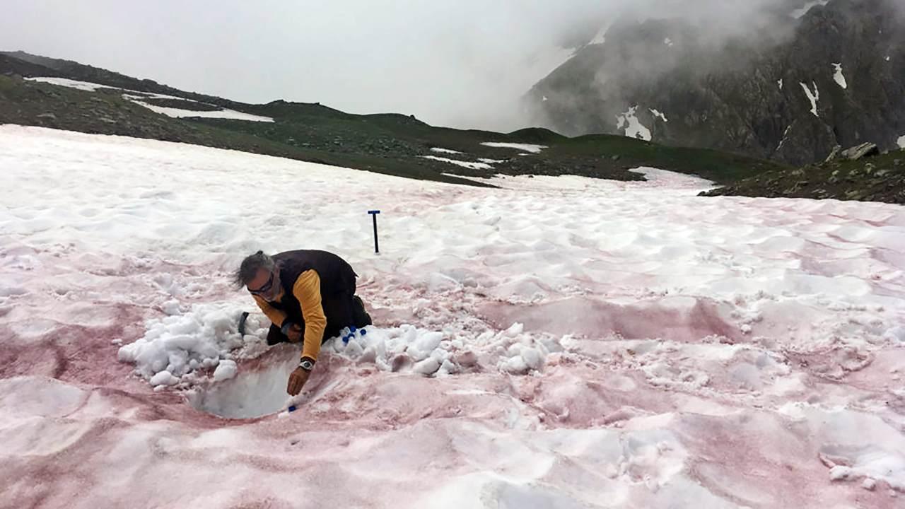 Une photo non datée montre un chercheur échantillonnant de la neige de couleur rouge dans les Alpes.  Les chercheurs commencent à étudier les espèces à l'origine des proliférations d'algues alpines afin de mieux comprendre leurs causes et leurs effets.  (Jean-Gabriel/Valaey/Jardin du Lautaret/UGA/CNRS/ALPALGA via The New York Times) -- PAS DE VENTE ;  POUR UN USAGE ÉDITORIAL UNIQUEMENT AVEC NYT STORY SLUGGED IRED SNOW ALGAE PAR CARA GIAIMO POUR LE 11 JUIN 2021. TOUTE AUTRE UTILISATION INTERDITE.  --