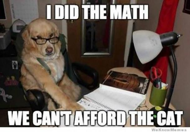 meme de la journée nationale du chien